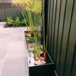 Ornamental Evergreen Trees For Small Gardens